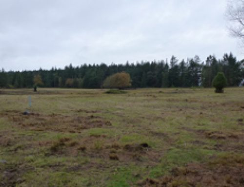 Henry Island Meadow Restoration